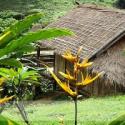 Bamboo Nest - Chiang Rai
